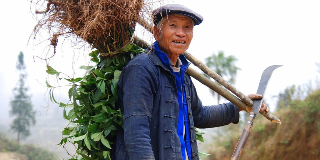 An elderly Chinese farmer carries some of his harvest on his back.